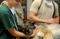 Не все ветеринары похожи на главного героя Корнея Чуковского - доброго доктора Айболита.