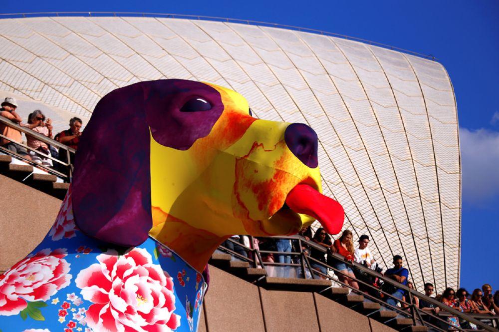 Зрители смотрят на большой фонарь в форме собаки во время празднования Китайского Нового года в Сиднее, Австралия.