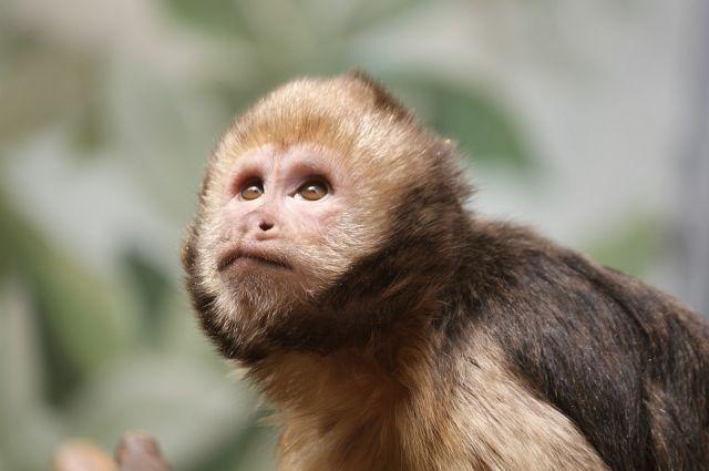 НаДону убраконьеров изъяли 33 обезьяны и8 носух