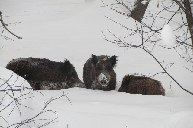 Дикие животные нередко выходят к людям в поисках еды.