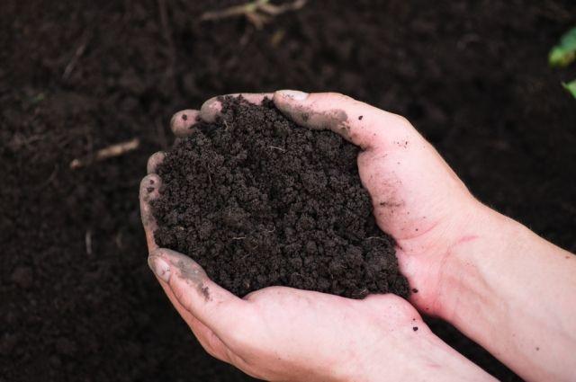 Химики МГУ разработали биопрепарат, разлагающий пестициды в почве