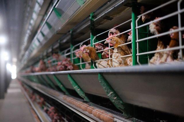 Кувейт открыл рынок для сельхозпродукции Российской Федерации