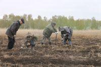 Лесопосадки - одна из приоритетных обязанностей специалистов.