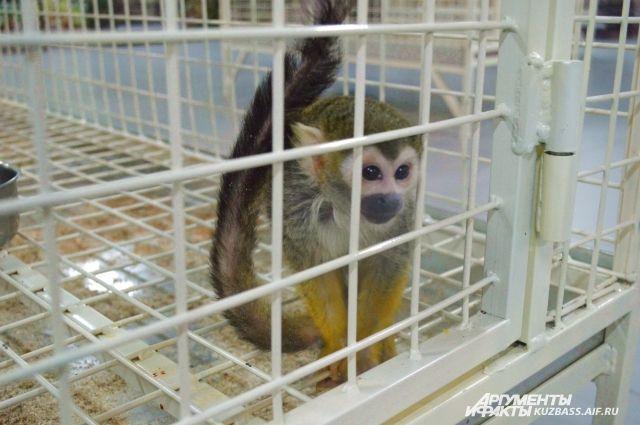 В Краснодарском крае задержали автобус с 33 обезьянами