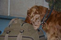 В аэропорту Оренбурга служебная собака нашла у пассажира килограмм насвая.
