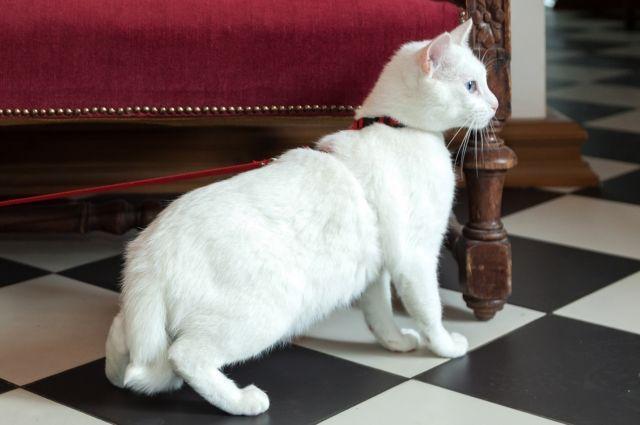 Эрмитажного кота-оракула посадят надиету передЧМ