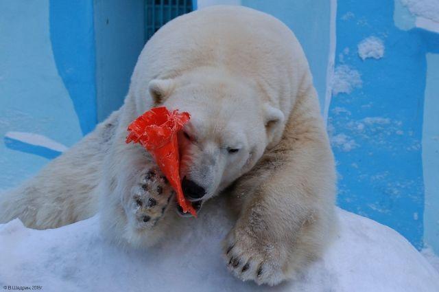 Медведи любят играть.