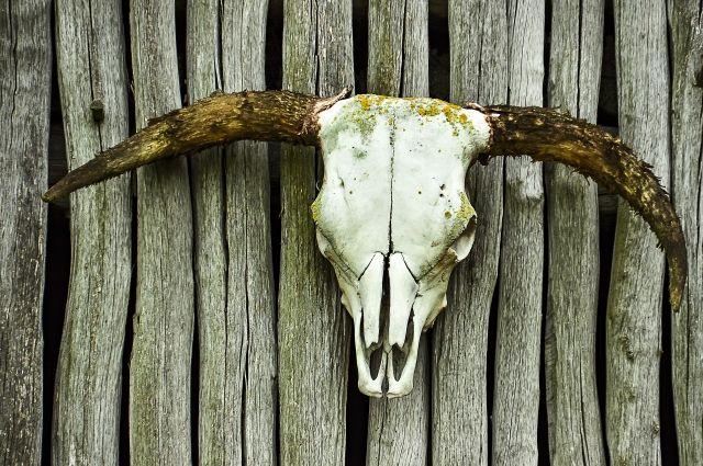 В Тюмени на окраине города обнаружили мешки с костями и останками коров