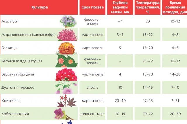 Условия для выращивания рассады однолетних цветов. Инфографика