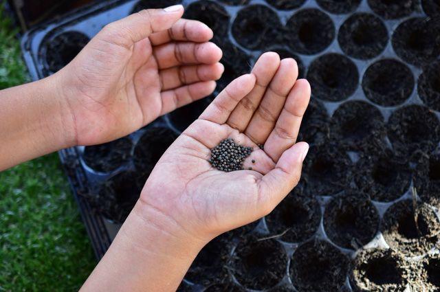 Как вырастить цветы из семян?