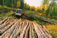 Если кто-то вырубил лес на участке, специалисты ведомства смогут оперативно раскрыть преступление.