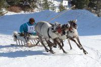 В Саранпауле пройдет 72-я Олимпиада оленеводов.