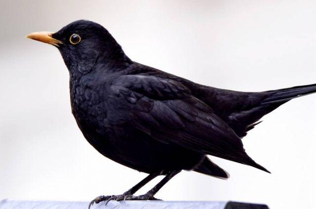 Скорее всего птица улетела из