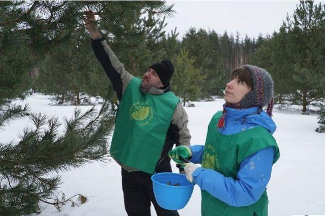 В области на 965 тысяч гектаров леса приходится шесть специалистов лесопатологов.