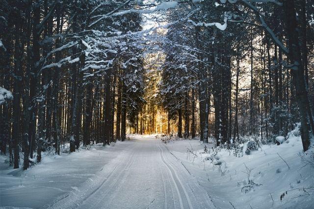 Новосибирские полицейские посоревновались на лыжне.