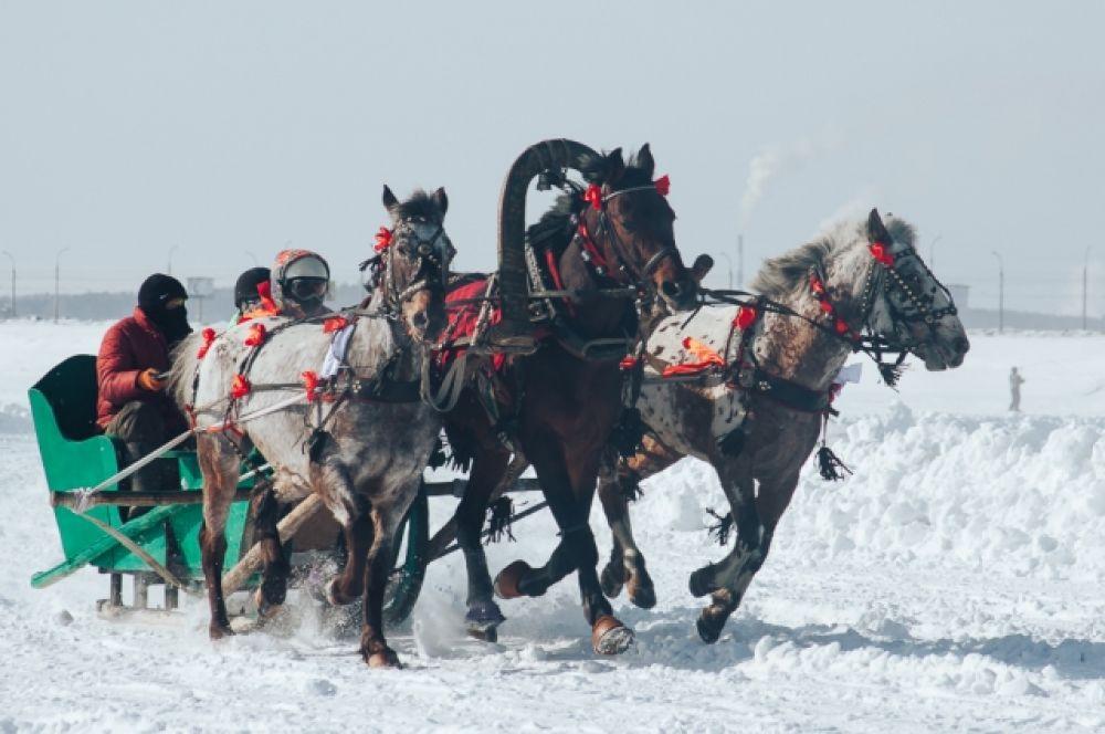 После двух полуфиналов состоялся финал, в который вышли лошади из Аларского и Усть-Удинского районов.