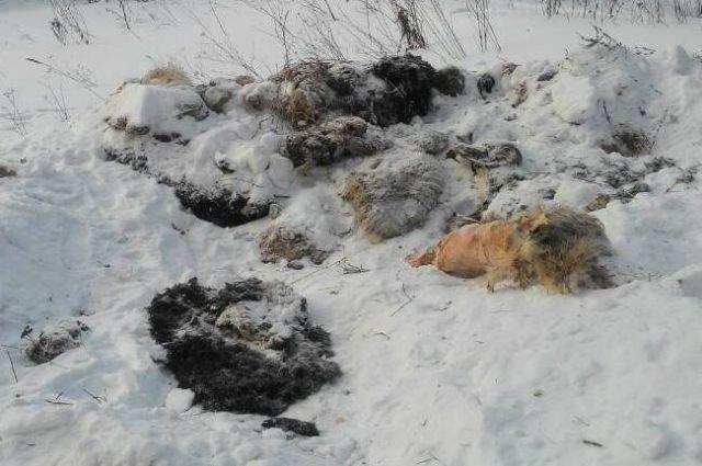 Трупы обнаружили недалеко от трассы Елабуга-Пермь, рядом с посёлков Пугачёво в Малопуринском районе.