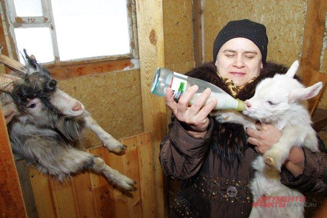 В подворье у Власовых сейчас пять коз.