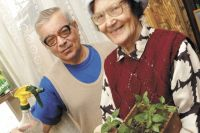 В феврале выращивать рассаду на подоконнике в условиях жилого помещения ещё рано.