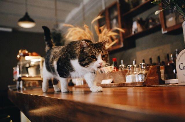 Очаровательный, но пока бездомный кот Мистер Полосочкин приглашает пермяков на ужин.