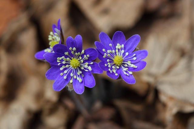 На «барнаульском Арбате» пройдёт праздник весны.