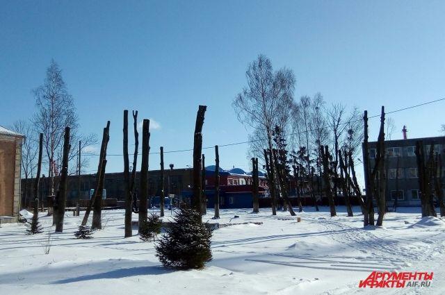 Администрация Калининграда опубликовала список улиц, где срубят деревья.