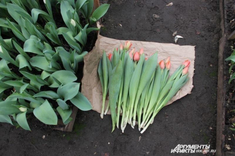 В магазинах Иркутска цена на тюльпаны начинается от 32 рублей.