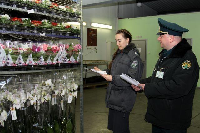 В Калининград перед 8 Марта ввезли более 7 тысяч цветов.