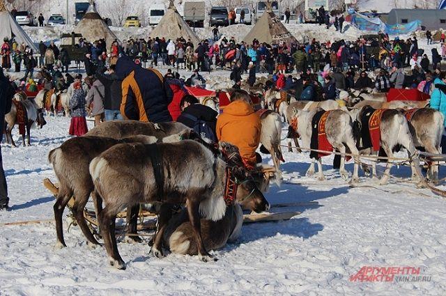На соревнования собрались восемь семей-кочевников.
