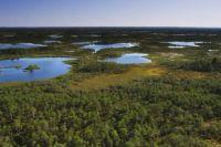 Васюганские болота - съемка с вертолета.