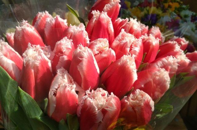 Сейчас в тренде махровые «с ресничками» и пионовидные тюльпаны.