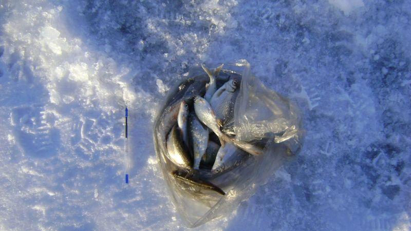 И ведь ловится! Тарань, окунек, густера… Рыбёшка размером не больше авторучки. Но сколько кайфа!