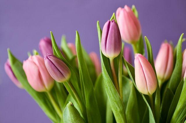 Тюльпаны - частый подарок на 8 марта