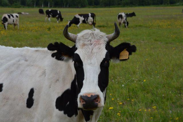 Вся продукция «Заречного» изготавливается из натурального молока.