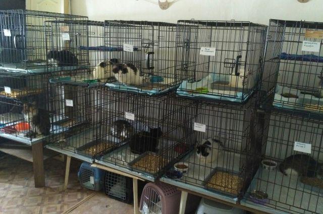 В приют «Матроскин» привезли 14 кошек.