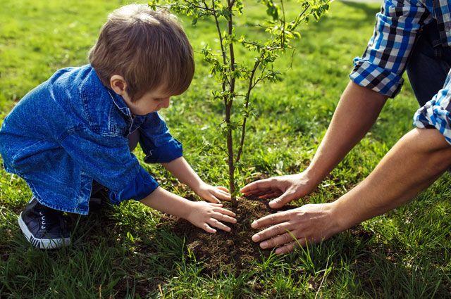 Картинка как сажают дерево 425