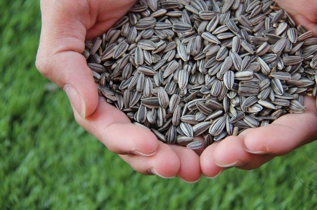 Специалисты проверят 10 образцов семечек.