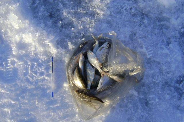 Желающие смогут отведать уху из пойманной рыбы.