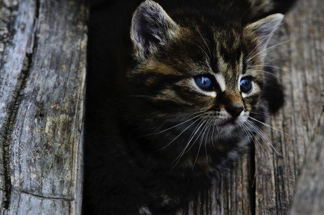 В Калининграде спасатели вытащили провалившуюся в глубокую яму котенка.