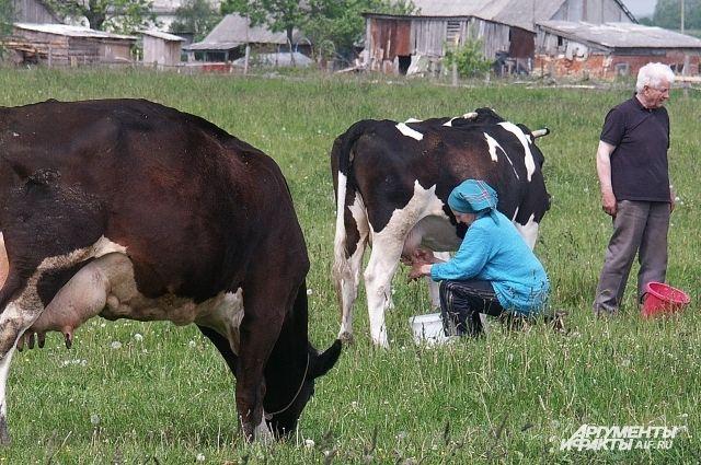 Заводы страны недополучают значительные объёмы и без того дефицитного молока-сырья. По официальным данным, России не хватает около 7 млн тонн сырого молока ежегодно.