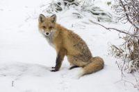 Дикое животное видели возле образовательного учреждения.