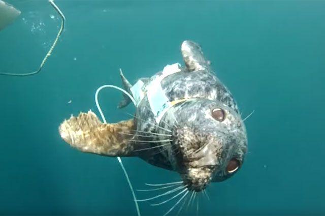 Тюлень способен сделать больше, чем робот.