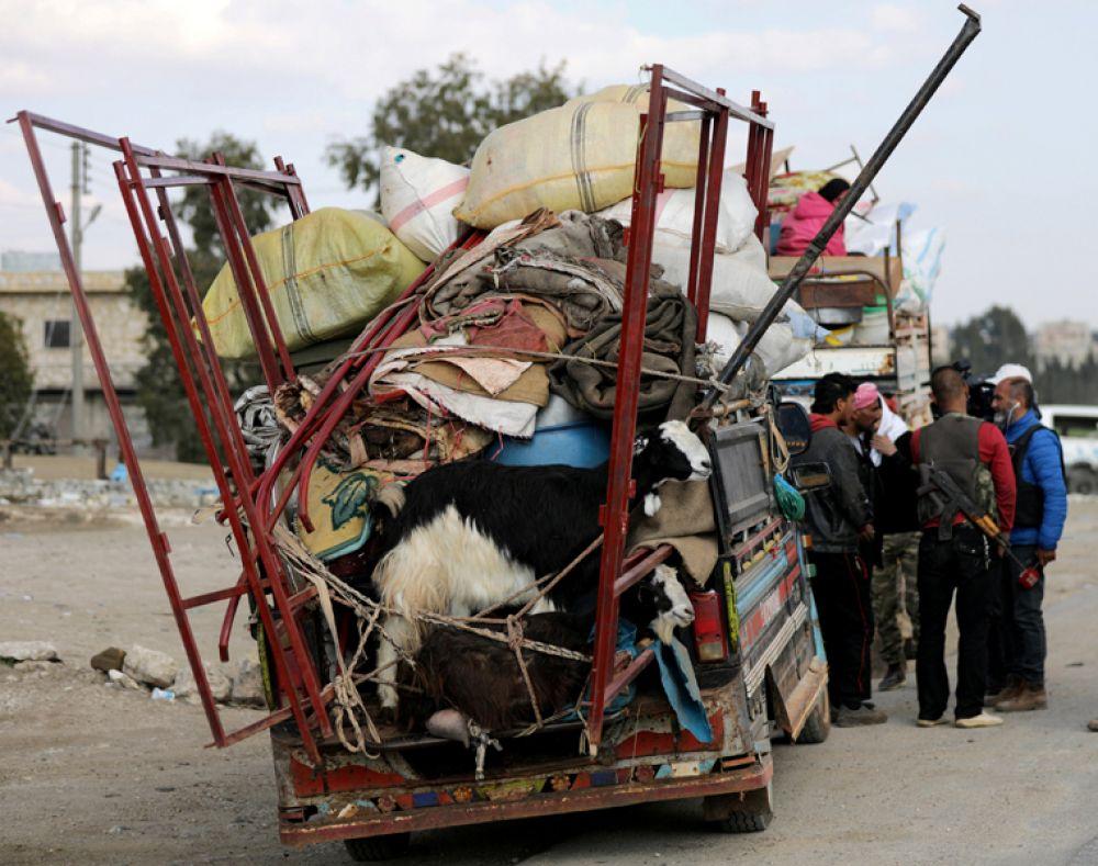Козы на грузовике в сирийском городе Африн.