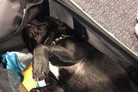 Пассажиры самолета три часа слушали, как в багажнике умирает собака