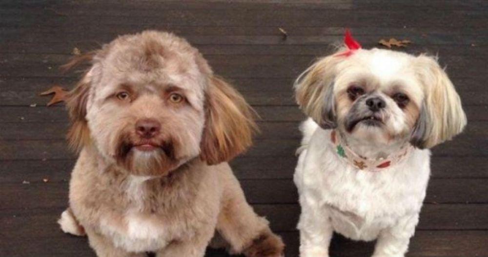 Пользователей социальных сетей удивило фото собаки с человеческим лицом.