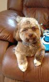«Мои друзья удивились. Написали, что действительно собачка имеет человеческое лицо и умные глаза», – рассказала Деджардин.