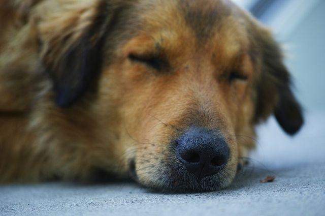 Мужчина напал на бездомную собаку и нанёс ей тяжкие повреждения.