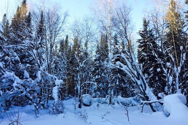 Всероссийский день знаний о лесе проводится с 2013 года.