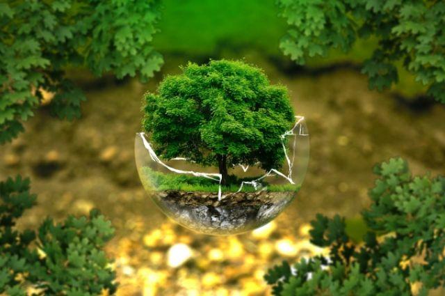 Год экологии закончился. Что дальше?