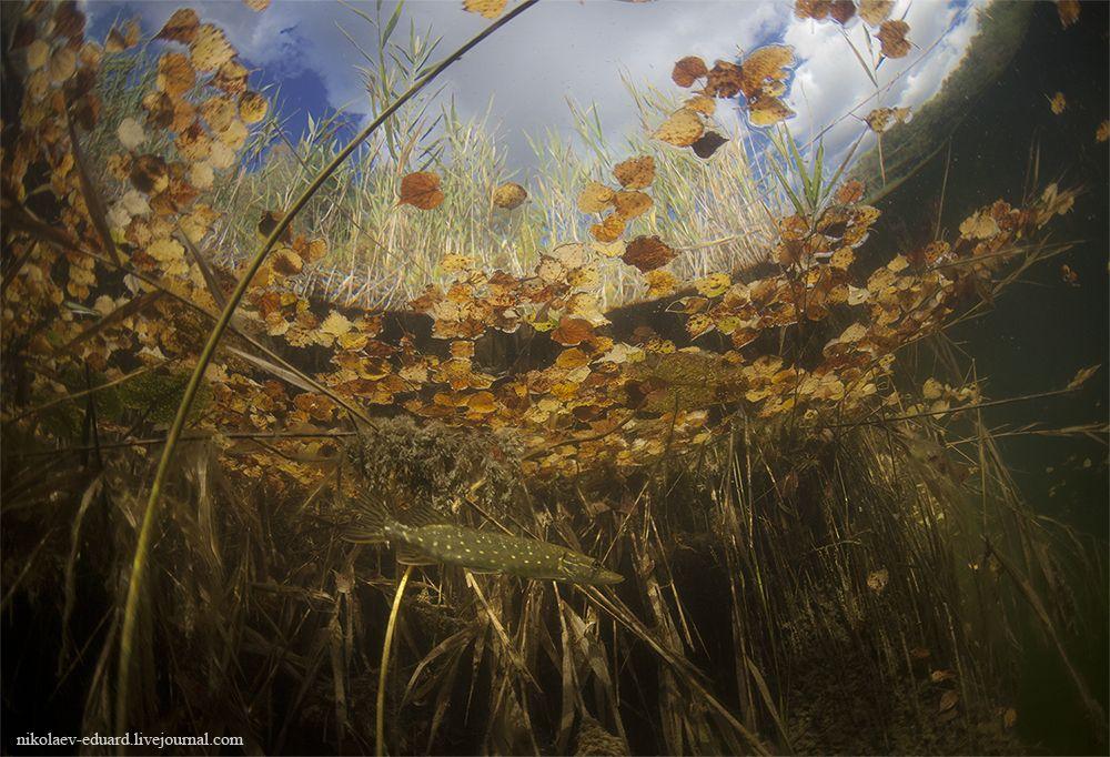 """Эта фотография под названием """"Скоро осень"""" была сделана на озере Челдови в Марий Эл."""
